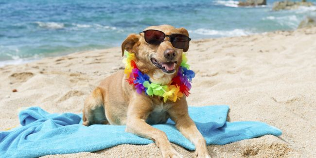 relaxing-dog-at-the-beach-1.jpg